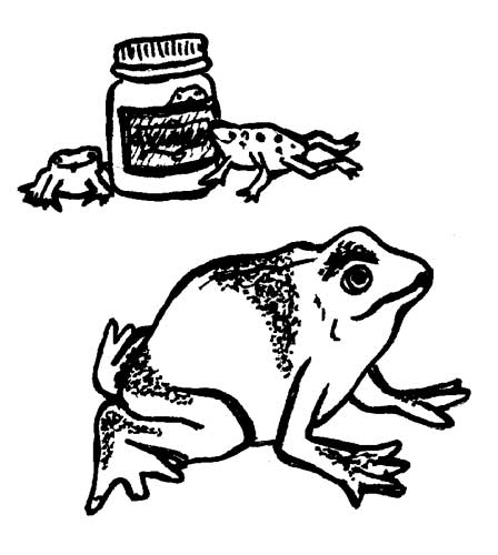 SQUIRTING FROGS IN A JAR